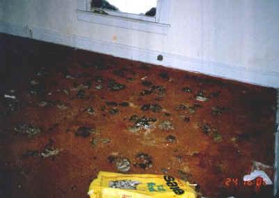 Nice carpet!  Typical hoarder